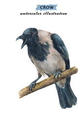 Angry, crying crow sitting on the branch. Watercolor hand drawn illustration isolated on white background.