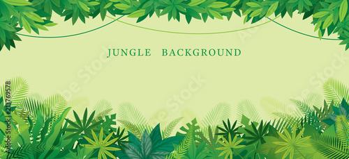 Tropikalna dżungla rama, forrest, roślina i natura, tło