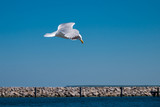 seagull 5 - 213786567