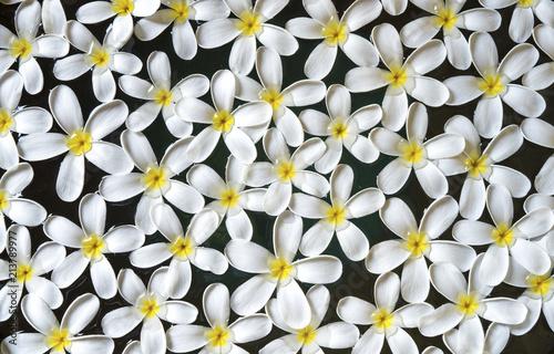 Plexiglas Plumeria Frangipani or plumeria flowers in the water