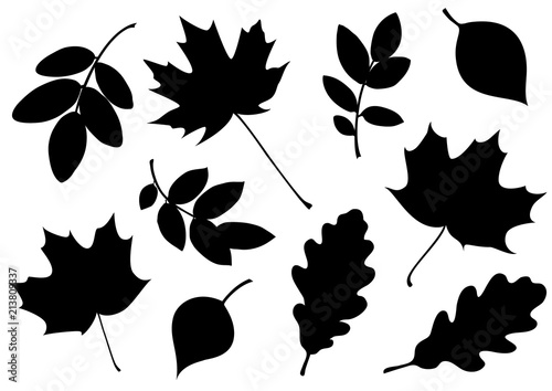 Vector set of decorative autumn leaf silhouettes. - 213809337