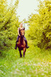 Young woman ridding on a horse - 213822142