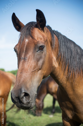 Fototapeta Horse on the meadow at animal shelter.