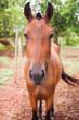 Front horse portrait