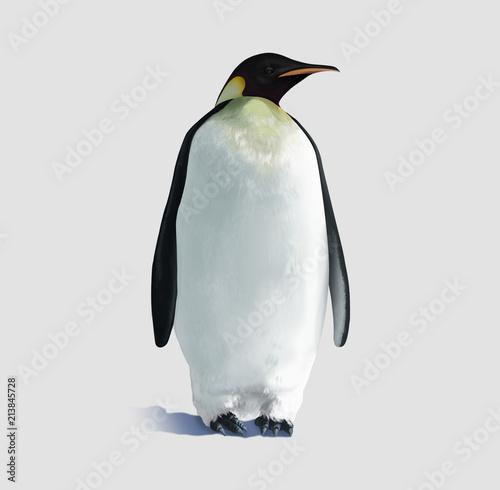 Fotobehang Pinguin Pinguino isolato