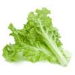 Leinwanddruck Bild - fresh green lettuce salad leaves isolated on white background