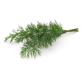 Close up shot of branch of fresh green dill herb leaves isolated on white background - 213856303