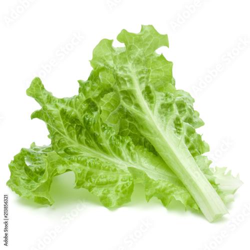 Leinwanddruck Bild fresh green lettuce salad leaves isolated on white background