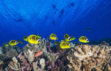 Yellow fish under divers - 213863111
