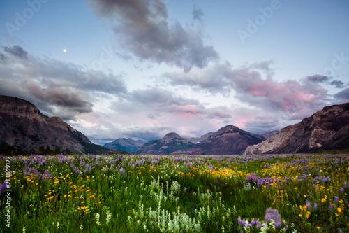 Plexiglas Zonsopgang Wildflower Heaven | Waterton Glacier International Peace Park Canada