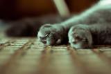 Сat's feet - 213899180
