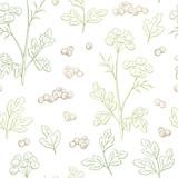 Coriander cilantro plant graphic color seamless pattern background sketch illustration vector - 213901103