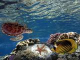 Underwater scene. Coral reef and turtle in clear ocean water - 213904351