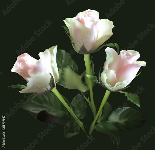 Fototapeta isolated on black light pik three rose flowers