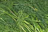 Heap of fresh green dill closeup. - 213911541