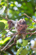 a little monkey view