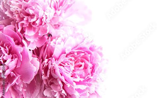Beauty pink peony flowers - 213913543