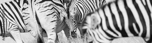 Zebra stripes pattern