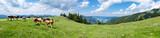 Panorama Alm im Salzkammergut - 213934573