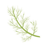 Vector dill illustration isolated in cartoon style. Herbs and Species Series - 213941582