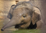 A small elephant is bathed in water