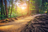 Majestic view on bright path with sunny beams. Location Plitvice Lakes National Park, Croatia.
