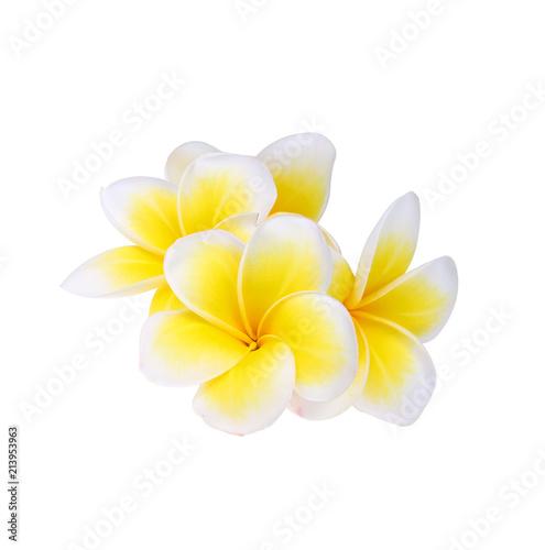Foto Spatwand Plumeria Frangipani flower isolated on white background