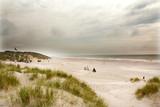 North Sea beach in Denmark. Dune grass.