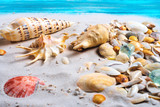 Summer beach. Sand and sea  shells on a wooden blue floor, summer concept - 213971797