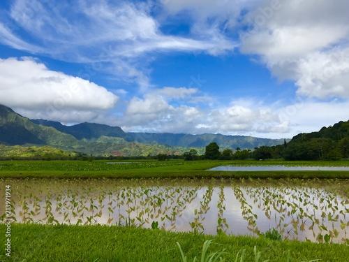 Canvas Lente cloudy taro field