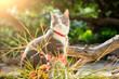 Tabby cat with red collar at sunset