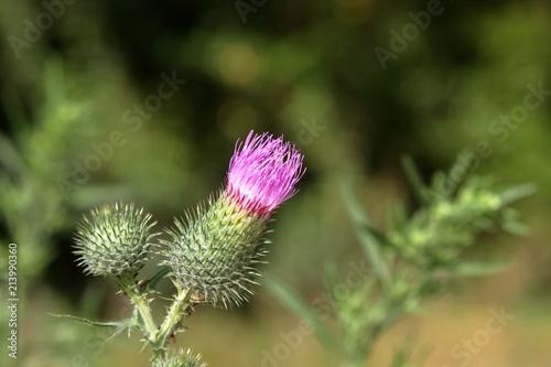 Fiore Viola Su Sfondo Verde Con Spazio Libero Parte Superiore Buy