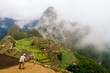 Worker spreads dirt on a terrace of Machu Picchu
