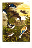 Collection of illustrated birds. - 214039127