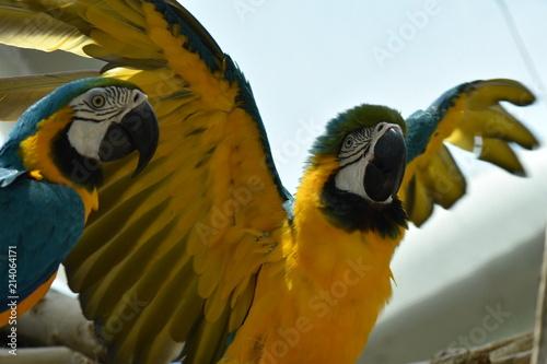 Foto Spatwand Papegaai Parrot