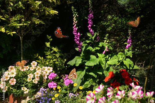Fotobehang Zwart Schmetterling 500