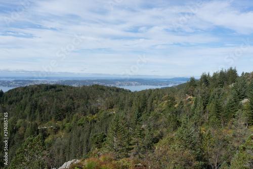 Foto Murales Bergen forest