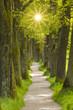 Leinwandbild Motiv Baumallee mit vielen Eichen und Sonnenstrahlen