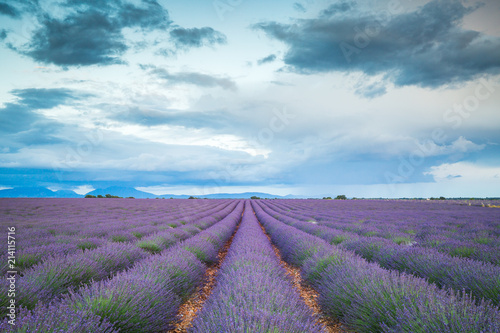 Aluminium Lavendel Lavender fields in France
