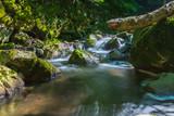 Fluss in der Natur im Wald bei Sonnenlicht - 214121121