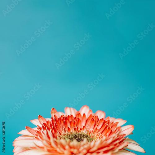 Spring Flowers - 214126913