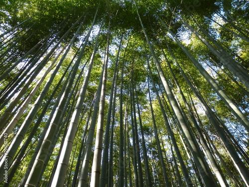 Aluminium Bamboe Aufstrebender Bambus