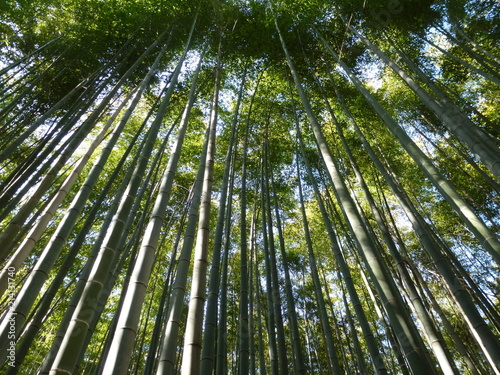 Canvas Bamboe Aufstrebender Bambus