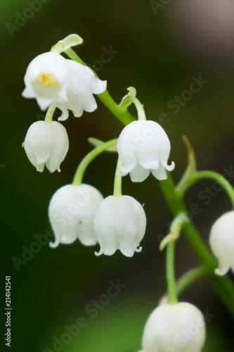 Foto Spatwand Lelietjes van dalen Lily of the valley wildflower close-up