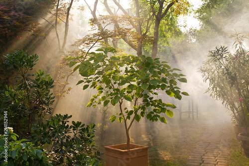Foto Murales Licht und Dunst im Garten