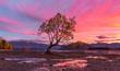 Wanaka Tree at Sunrise