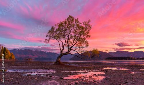 Wanaka Tree at Sunrise - 214181954
