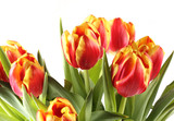 тюльпаны цветы стоят на белом фоне есть место для записи  - 214183133