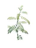 Illustration of plant - 214184117