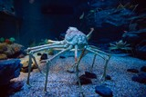 Large King Crab live in deep water - 214187921